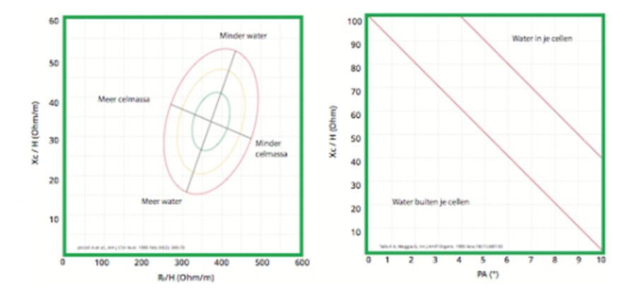Mijn Gezonde Voeding - schema van BIVA-meting - resultaten interpreteren - lichaamssamenstelling - vetgehalte